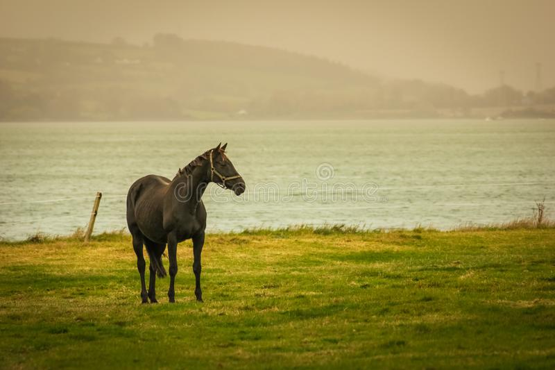 Horse and landscape in county Cork. Ireland. Lonely Horse and landscape in county Cork. Ireland stock images