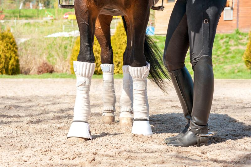 Horse legs in bandages with riding leather horsewoman boots. Out stock photos