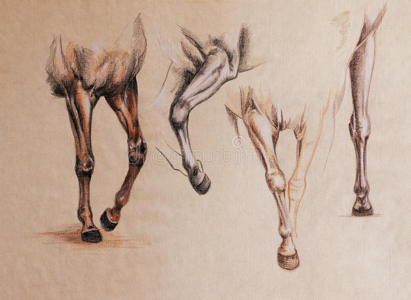 Horse legs study stock illustration. Illustration of paper - 63455347
