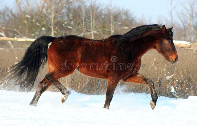 A horse at liberty stock photography