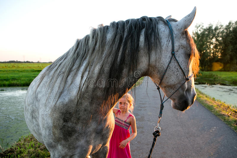 Horse and a little girl stock image