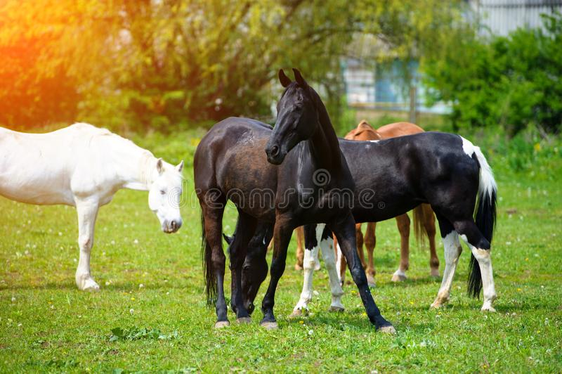 horse with long mane on pasture against beautiful blue sky royalty free stock image