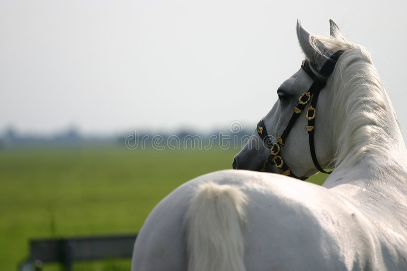 Horse looking away stock image