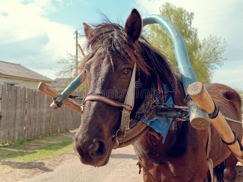 Horse harness large portrait of a country horse stock photos