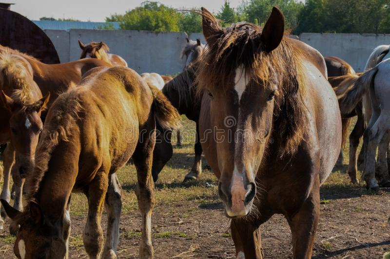 Horse looking forward in sunny weather in the field royalty free stock images