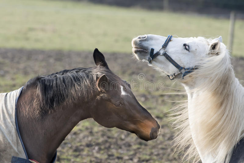 Horse emotion stock photo
