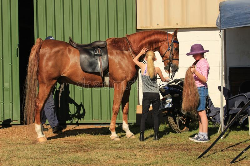 Horse lovers preparing American Saddle Horses for a horse show stock photography