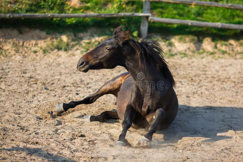 Horse lying in the stable. At autumn time stock photo