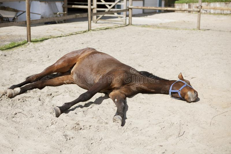 Horse is lying in the sun stock photo