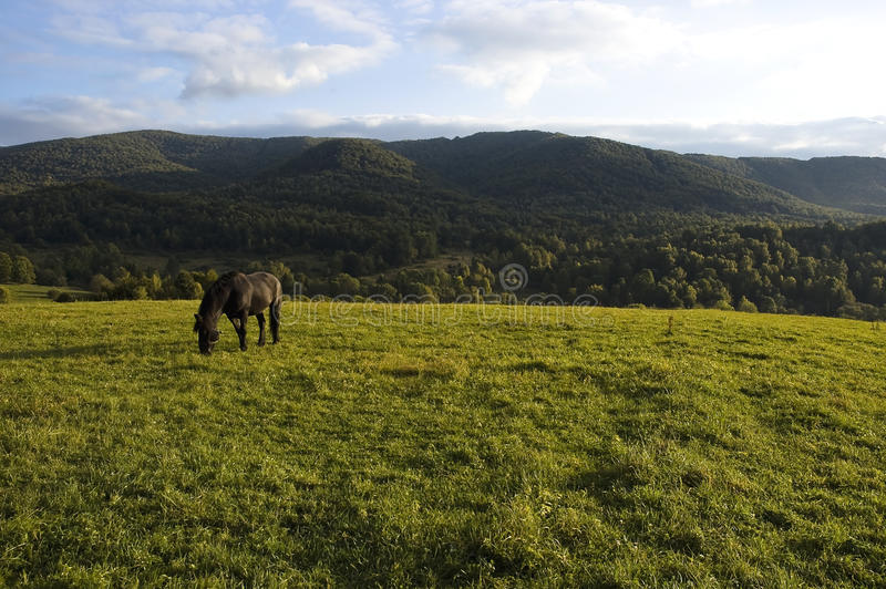 Download Horse on the meadow stock photo. Image of landscape, bridle - 19133378