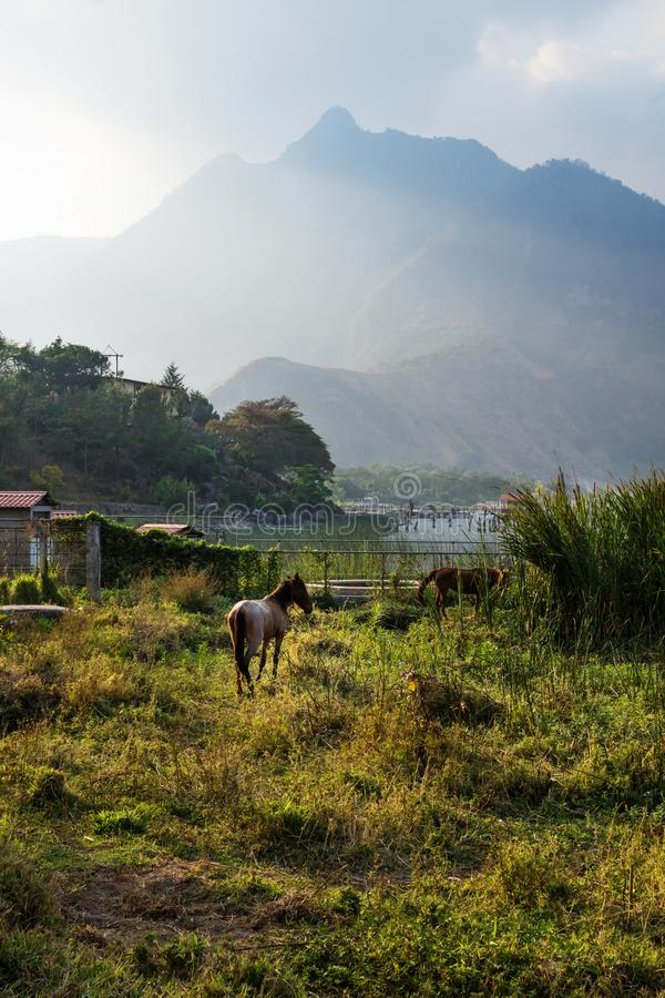 Horse on a meadow along Lago Atitlan with mountain peak vertical, San Juan la Laguna, Guatemala, Central America stock images