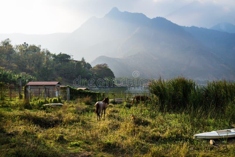 Horse on a meadow along Lago Atitlan with mountain peaks, San Juan la Laguna, Guatemala, Central America royalty free stock photo