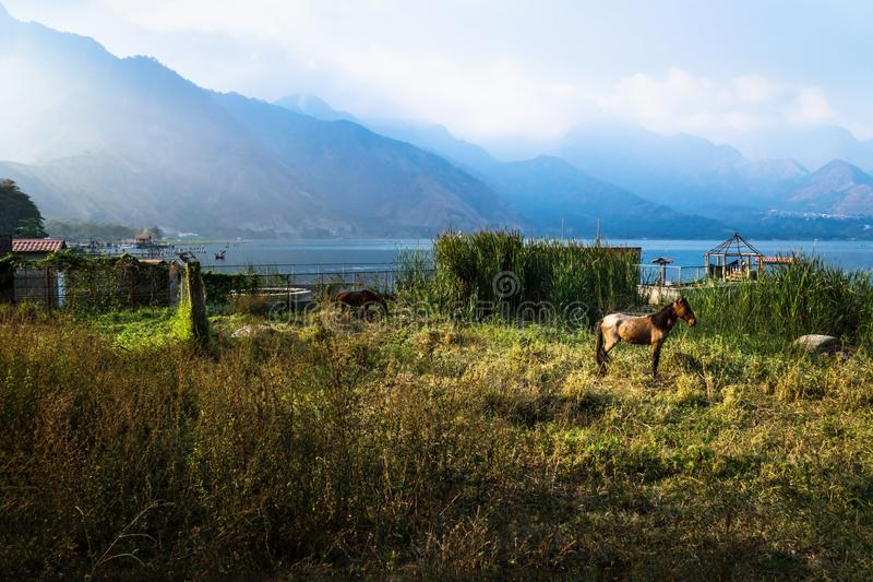 Horse on a meadow along Lago Atitlan with mountainrange, San Juan la Laguna, Guatemala, Central America stock photo
