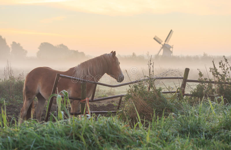 Horse in a meadow royalty free stock images