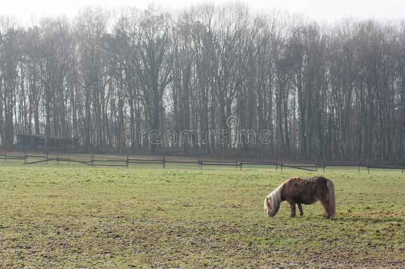 Horse in meadow stock image