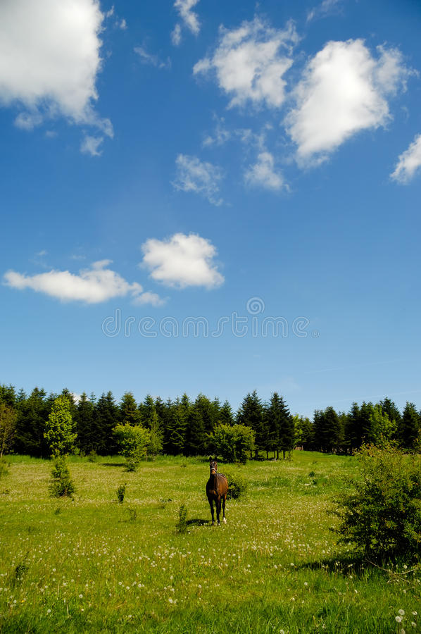 Download Horse on medaow stock photo. Image of natural, hair, clouds - 13225044