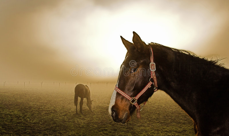 Download Horse in the mist stock photo. Image of country, outdoor - 2065340
