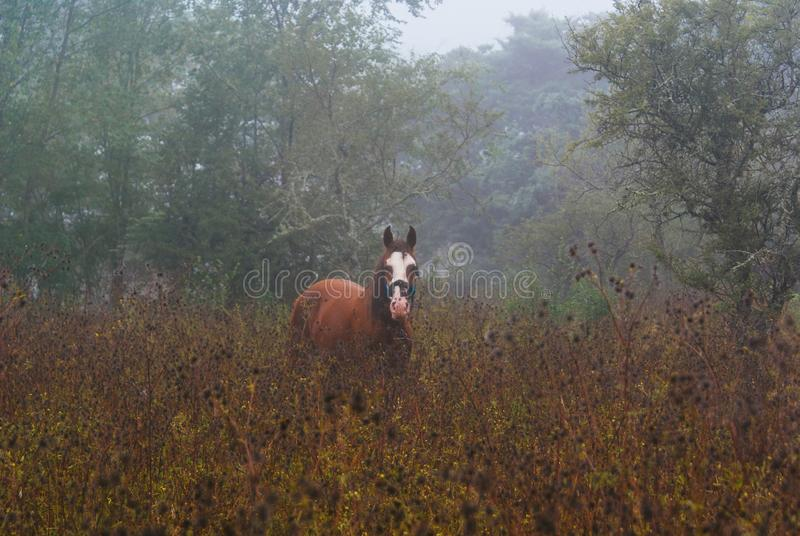 Horse on a misty morning stock images