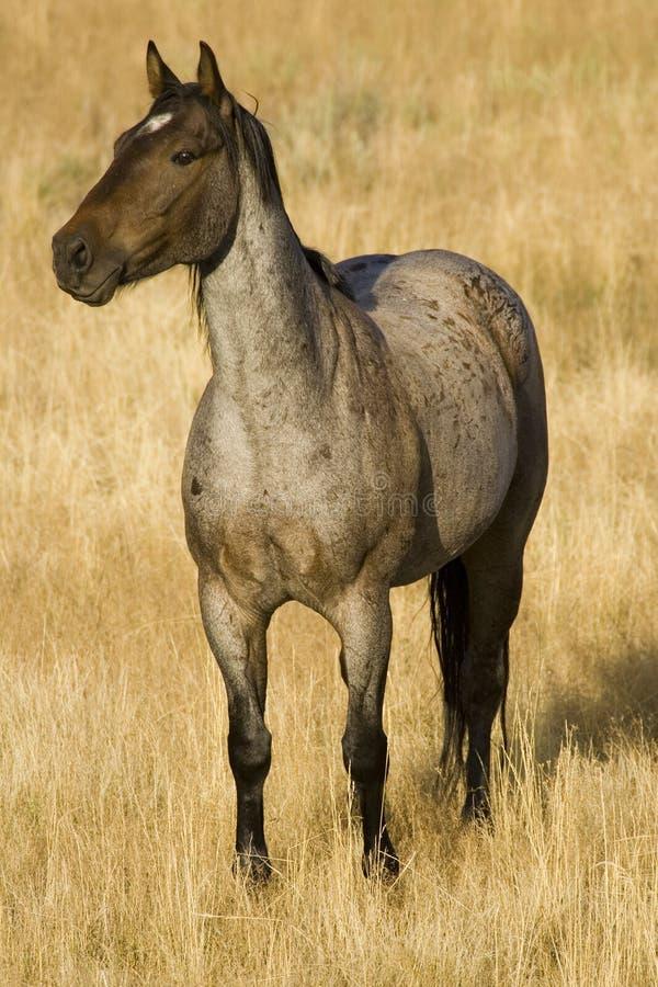 Horse in morning light stock photo