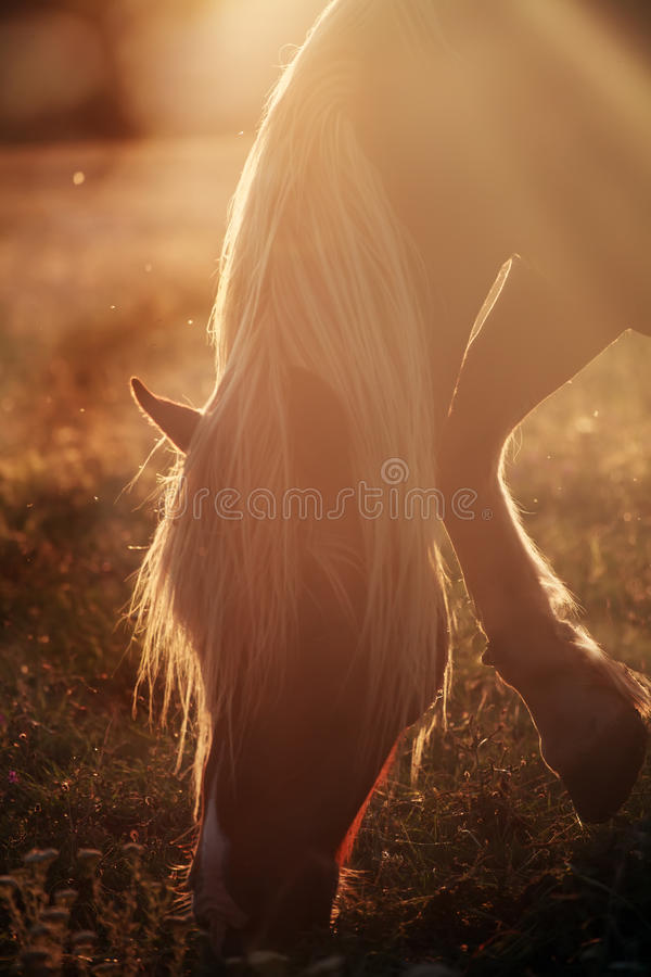 Horse in morning stock photography