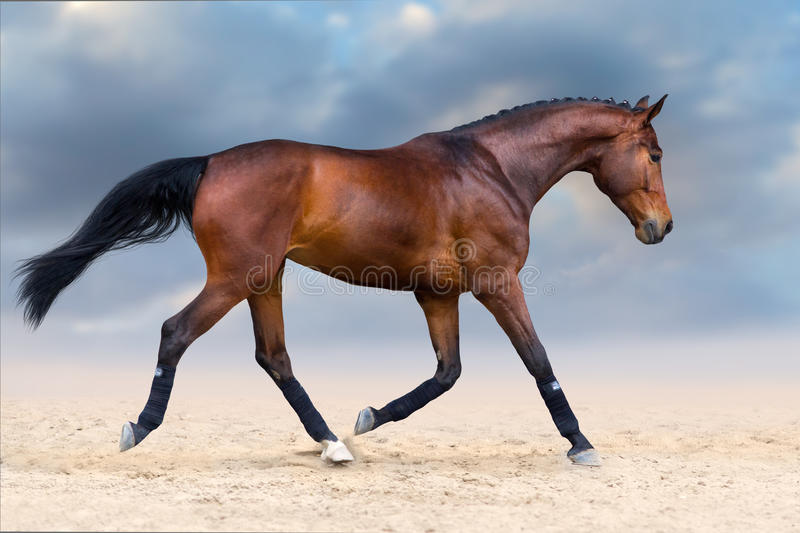 Horse in motion royalty free stock images