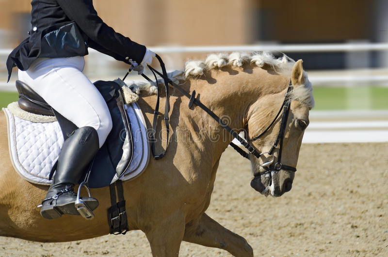 Horse in motion on a dressage area stock images