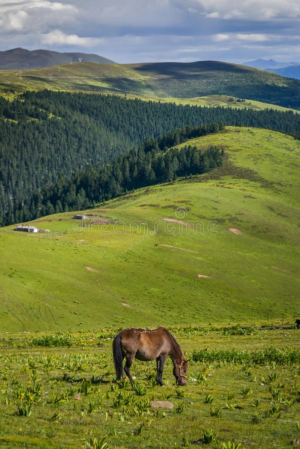 Horse on mountain meadows. Horse graze leisurely on mountain meadows stock photo