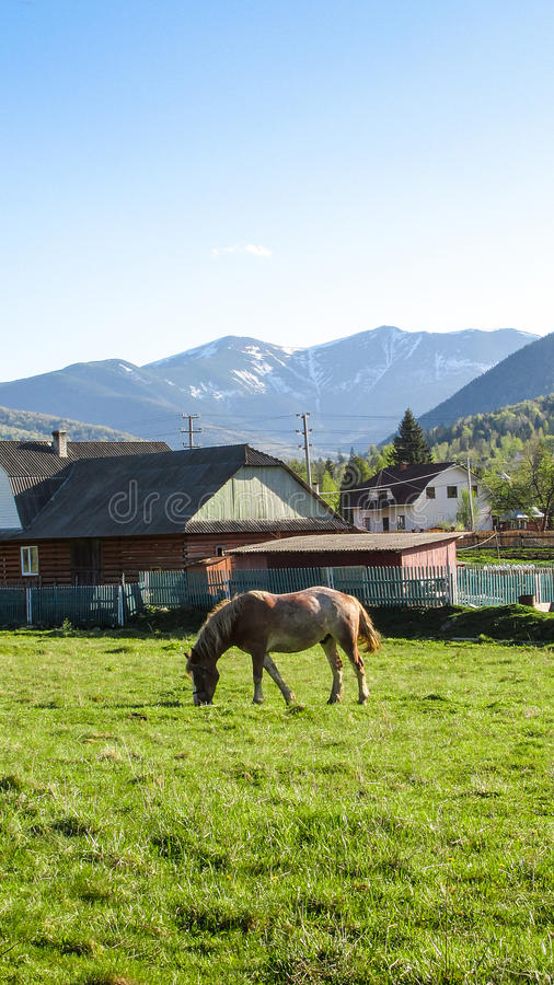 Horse with mountain Syvulya on the background. Ukrainian Carpathians, Huta village, taken in may 2015 stock photo