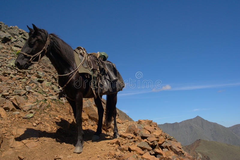 Download Horse in the mountains stock photo. Image of landscape - 15374760