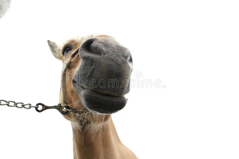 Download Horse mouth, nostrils stock image. Image of mouth, halter - 30890521
