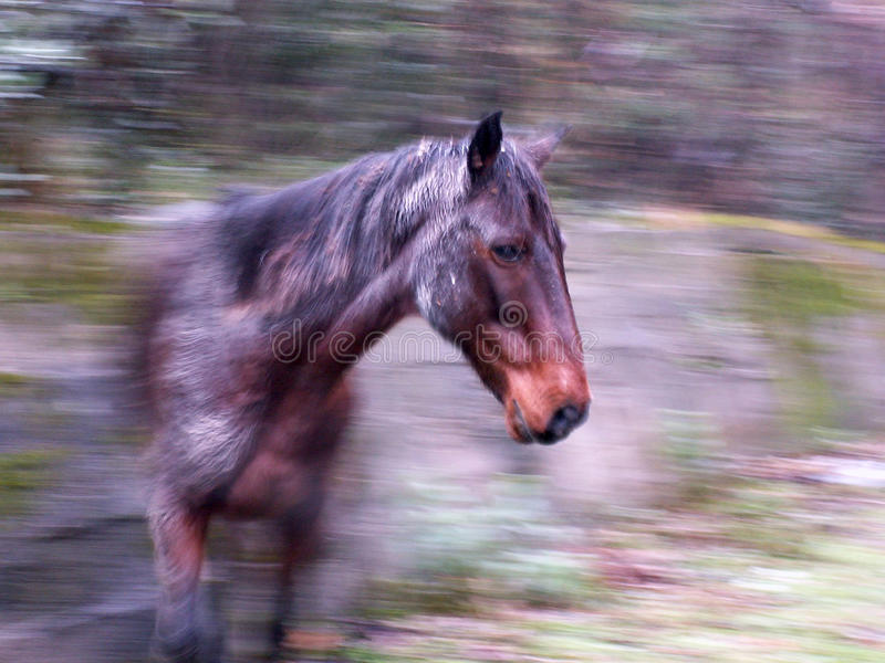 Download Horse in a movement stock photo. Image of horse, running - 10443658