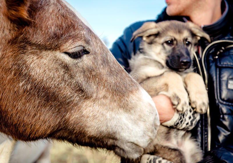 Horse muzzle and puppy royalty free stock photography