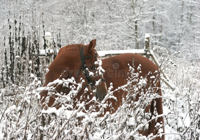 Horse On The Name Of Djeday Watches On Me. Royalty Free Stock Photo