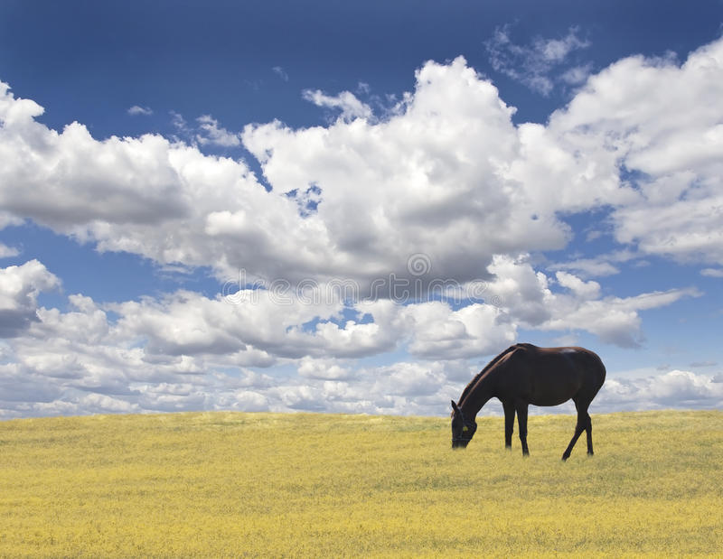 Horse in nature stock photography