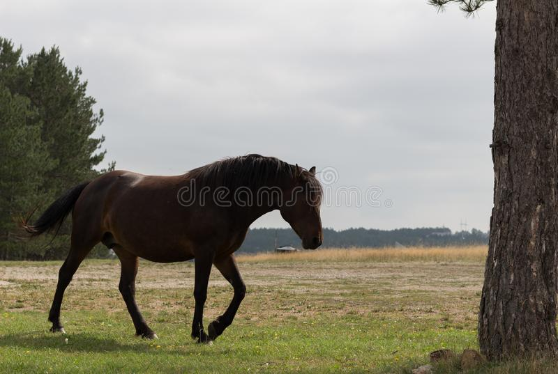 Horse in nature. Portrait of a horse, brown horse. Horse in nature. Portrait of a brown horse in nature royalty free stock image
