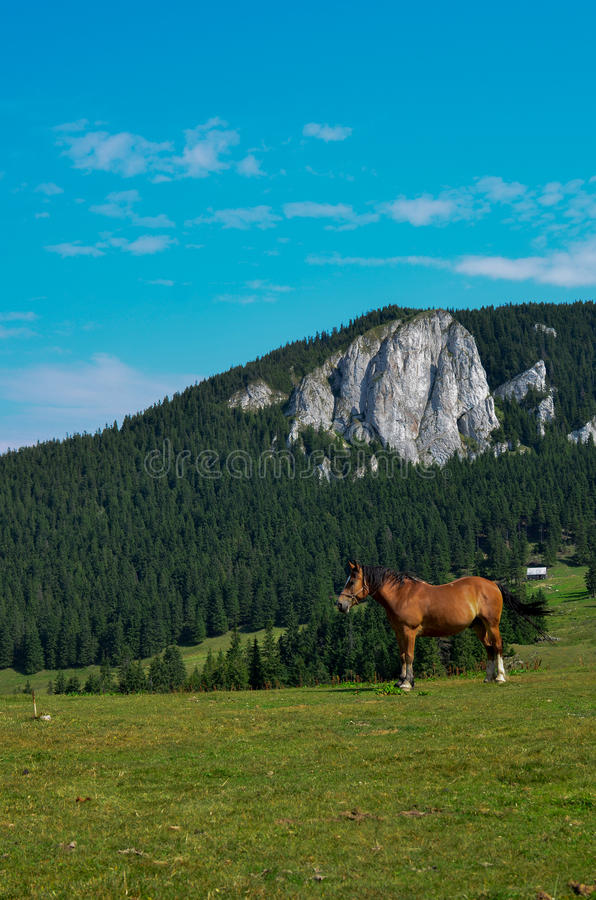 Horse in the Nature royalty free stock images