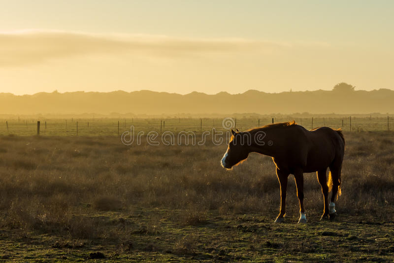Horse near Arcata. A horse stands in a farm pasture near Arcata, California royalty free stock image