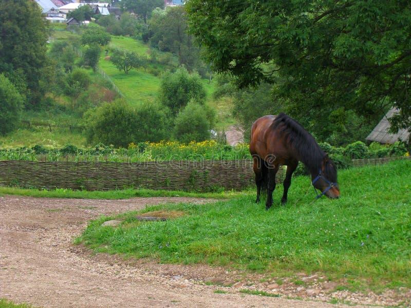 Horse near the road royalty free stock photography