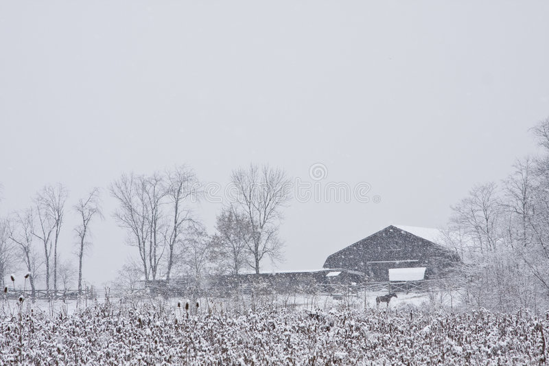 Horse near snow covered barn stock images