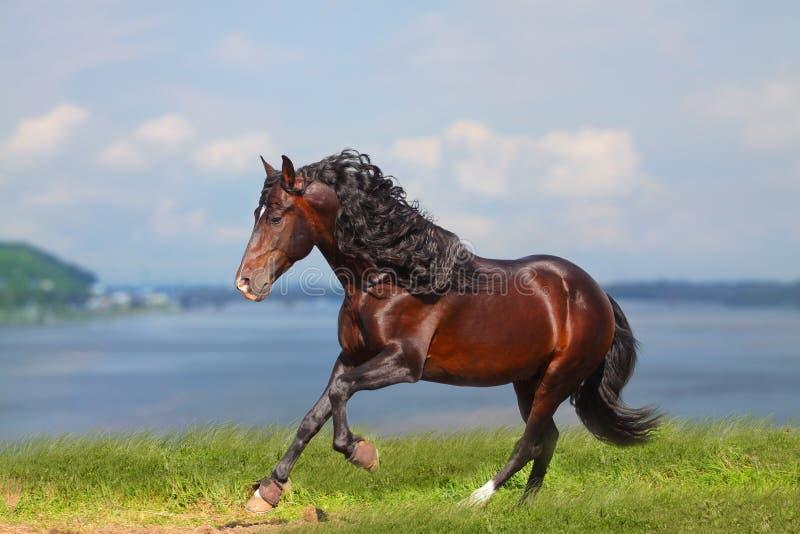 Horse near water stock photos