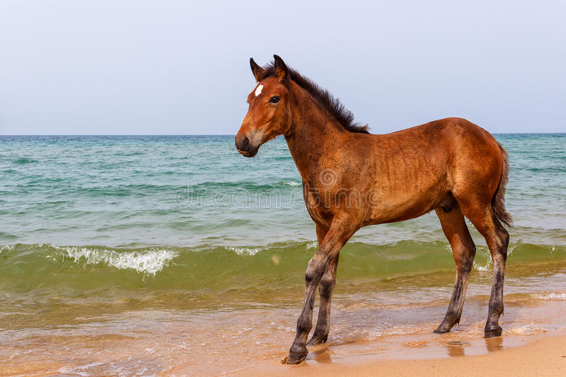 Horse near the water stock photography