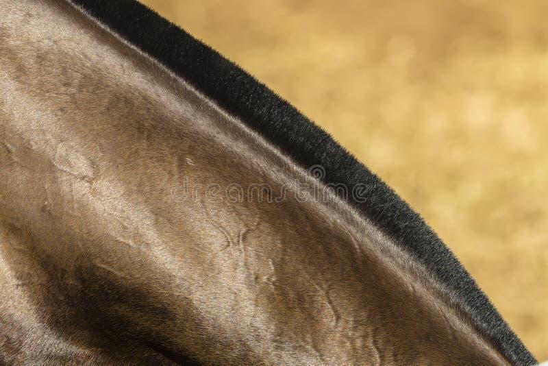 Horse Neck Detail stock image