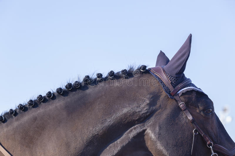 Horse Neck Grooming Detail royalty free stock photography