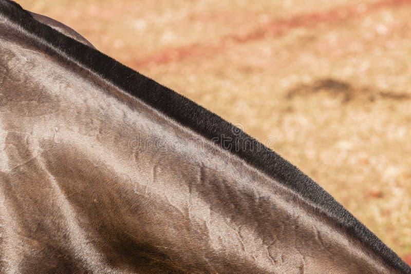 Horse Neck stock image