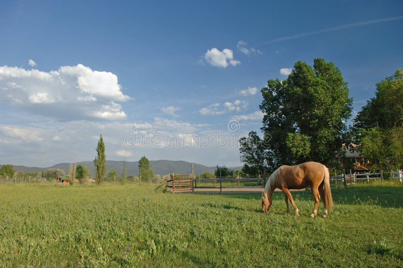 Horse in New Mexico stock images
