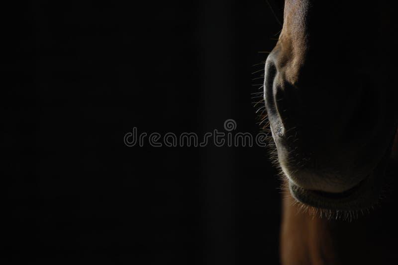 Horse nose closeup stock photo