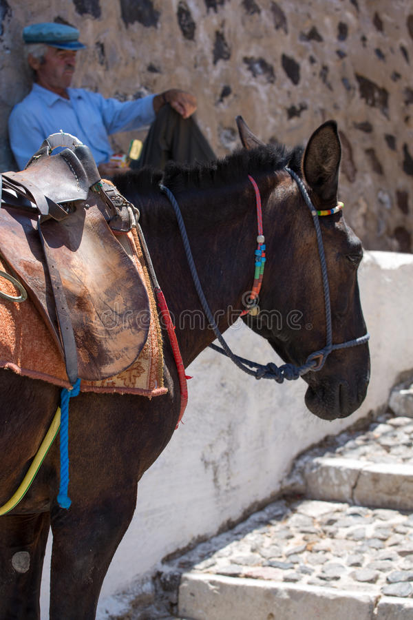 Download Horse And Old Man Sitting Quietly Against A Wall Editorial Stock Image - Image: 34404509