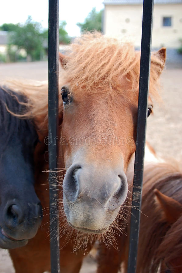 Horse Over Grating Royalty Free Stock Photo