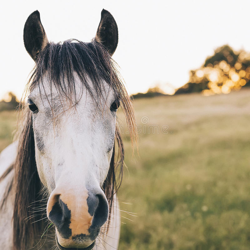 Download Brumby Horse Sunset stock image. Image of brumby, golden - 85871903