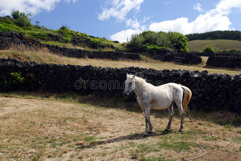 Download Horse on pasture stock photo. Image of meadow, horse - 21881442